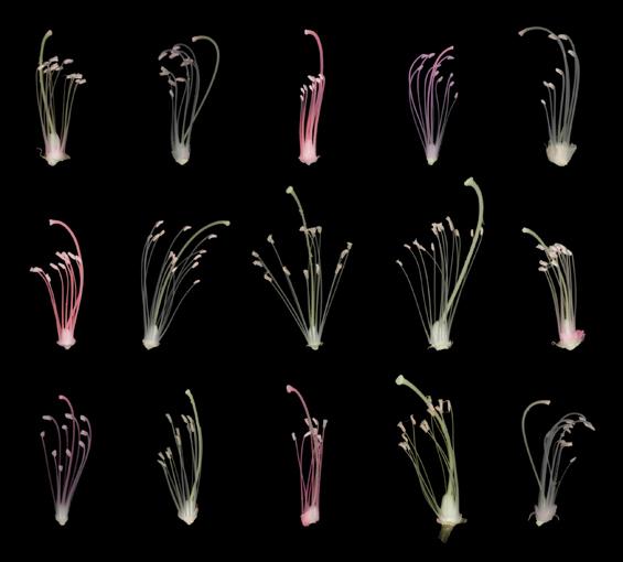 Efemera #140, 2002 Arşivsel pigment baskı 116.5 x 126.2 cm.