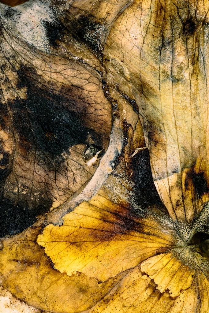 Orkidenin göz önünde ölümü // Apparent death of the orchid // OCÇ 2014